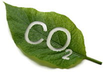 Botanical Oil Extraction using Environmentally Friendly CO2